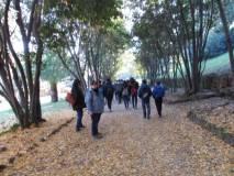 Si entra a Villa Sciarra , il viale è coperto dalle foglie autunnali