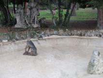 Il cane del gruppo scultoreo è stato divelto e buttato nella fontana