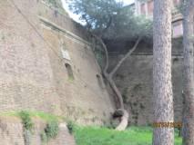 La spiegazione della Mura Urbaniane, del bastione e delle feritoie: ma anche di un albero…
