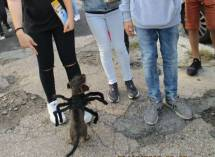 I ragazzi si divertono con un cagnolino travestito per <i>Halloween</i>