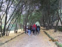 Enrico Luciani saluta: i gruppi proseguono la visita tra le foglie gialle del Ginkgo biloba