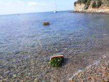 La corona con il tricolore lanciata in mare verso la lapide/scoglio che ricorda l'imbarco di Garibaldi e Leggero il 2 settembre 1849